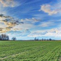 Зазеленело  поле. :: Валера39 Василевский.