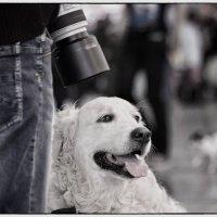 Собака фотографа. :: OKCAHA Валова
