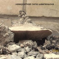 Сила природы :: Анатолий Мартынюк