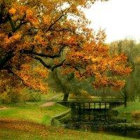 Парк в Павловске :: Светлана Герасимова
