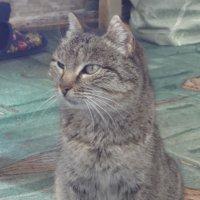 Бабушка кошка :: Владимир Ростовский