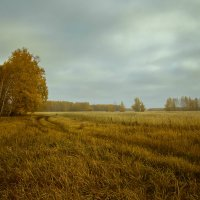 Хмурая осень. :: Kassen Kussulbaev