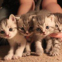 У меня уже готов для тебя букет котов :: Татьяна Рига