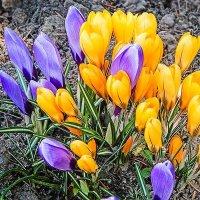 Весна :: Nick