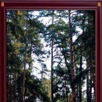 В сосновом лесу :: Владимир Бровко