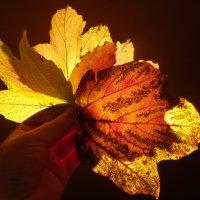 Осень в руках :: Олеся Енина