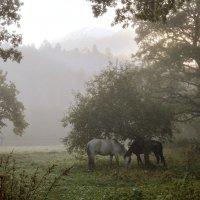 В предрассветном тумане... :: Юрий Спасовский