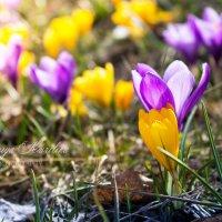 Весна пришла! :: Ксения Курилина