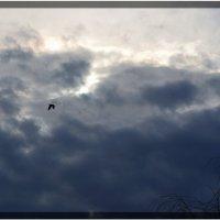 А буревестник просит бури :: Валерий Лазарев