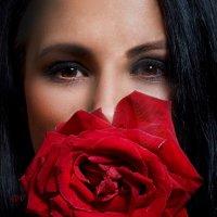 роза :: Милана DV