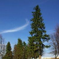 Танцующие деревья :: Валерий Талашов