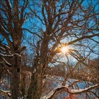 Если зима шутит до апреля, хочу чтобы лето мстило до декабря :) :: Алексей Латыш