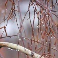 Нелетная погода :: Ната Волга