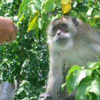ТАйланд, Пхи-Пхи :: Андрей Купер
