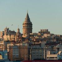 Галатская башня :: Светлана Королева