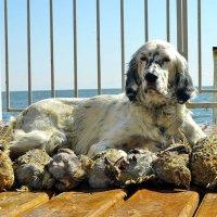 Да, я охотничья собака :: vovavova70 Вавилон