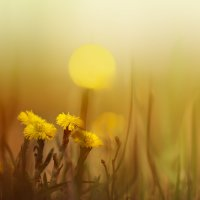 Весна ... :: Sergey Zimoglyad