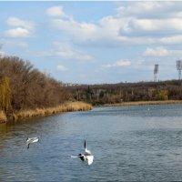 Апрель,чайки в городе... :: Тамара (st.tamara)