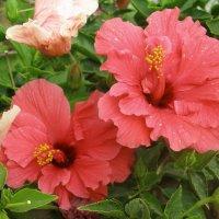 Южные цветы :: Elena Ignatova