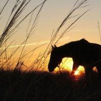 Выйду ночью в поле с конём... :: Элеонора Чемкаева
