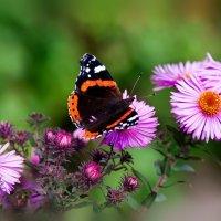 Бабочка :: Михаил Райдугин