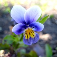 цветочки0 :: Мария Пашкова