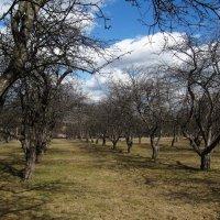 Яблоневый сад еще во сне... :: Николай Дони
