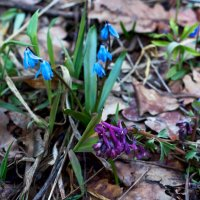 Весенние цветы :: Юрий Стародубцев