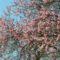 Весна ... :: Schbrukunow Gennadi