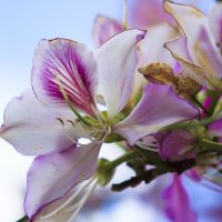 весна :: Павел Коротун