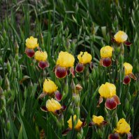 цветы :: Алексей Жуков