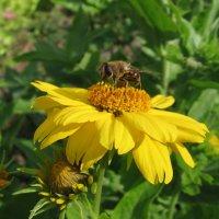 Пчелка и цветок :: Владимир