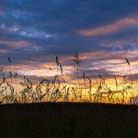 Закат в поле :: Любовь Б