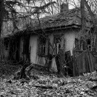 Дома в Чернобыле :: Ольга Винницкая