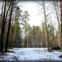 Лес в конце зимы :: Алексей Подлесный