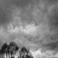 Летят перелетные птицы :: Владимир Новиков