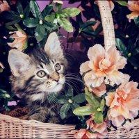 Котенок в цветах :: Jamila Agaeva