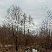 Весна пришла :: Владимир Новиков