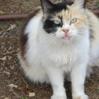 Знакомая кошка :: Герович Лилия