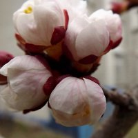 Весна пришла :: Liliya Kharlamova