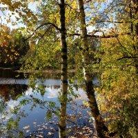 Осенний этюд. :: mike95