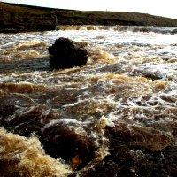 Разлив реки Тосна :: Наталья Лунева