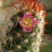 Первое цветение :: LeDi WaDa