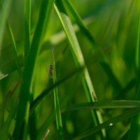 Мошка в траве :: Максим Никитин