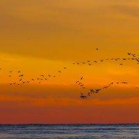 Птицы улетают :: Татьяна Гордеева