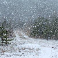 Снежный заряд :: Мария Кондрашова