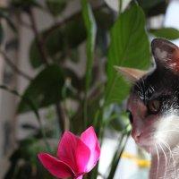 Ах вот ты какой аленький цветочек... :: Александр Орлов