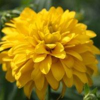 золотой шар :: сергеи шаманин