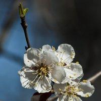 Весна пришла :: Ольга Винницкая (Olenka)