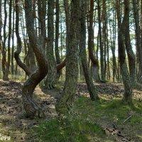 пьяный лес :: Екатерина Яковлева